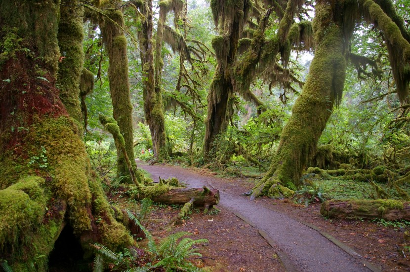 Forks_WA_Hoh_National_Forest_Trail