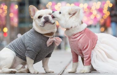 Quando dois cachorros resolvem noivar não existe palavra que defina tanto amor